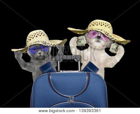 Cat and dog are going on a trip to travel with suitcase -- isolated on black