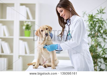 Veterinarian Doctor And A Labrador Puppy