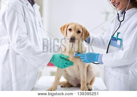 Dog at the vet clinic, close up