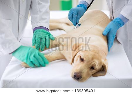 Examining sick dog at vet ambulance, close up