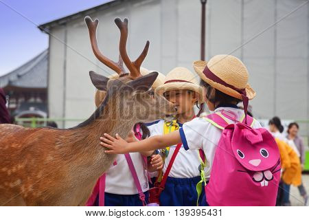 NARA,JAPAN- MAY 25, 2016: Tourists and wild deer in Nara on May 25, 2016. The deer in Nara have been regarded as heavenly animals, protecting the city and the country