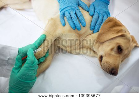 Veterinary Surgeon Is Giving The Vaccine To The Dog