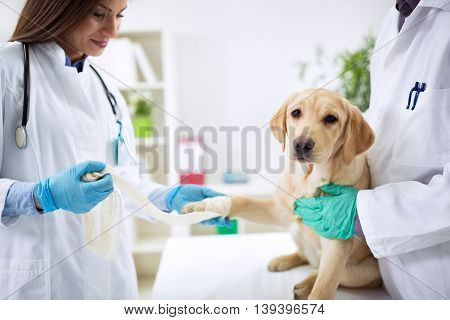 Team Of Veterinarian Take Care Of Dog
