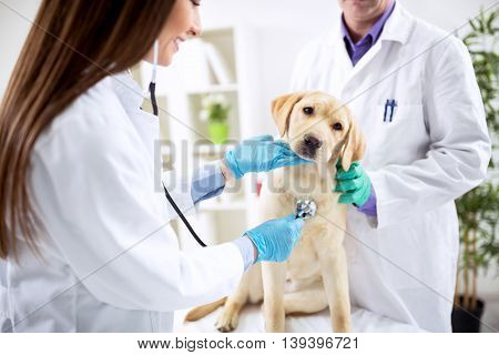 Smiling veterinary examining dog at clinic, close up