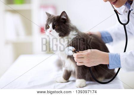 Cat check up at veterinarian office, close up