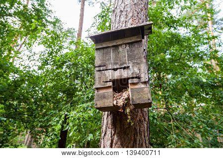 a handmade birdtable box in a wood