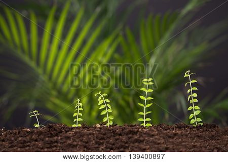 Photo Of Fresh Green Plant Growing From Soil