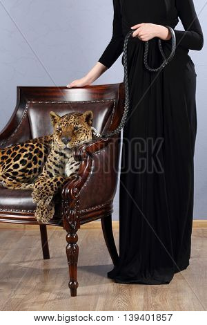 Leopard in chair behind him stands woman and holding leather leash