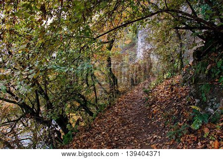 Autumn landscape in warm colors. Path along trees rocks and cliff