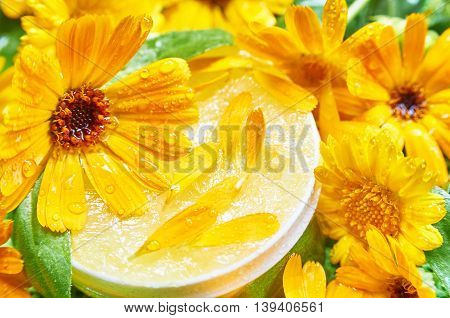 Marigold ointment and fresh marigold flowers. Natural ointment
