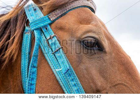 Closeup view of eye of brown horse muzzle.