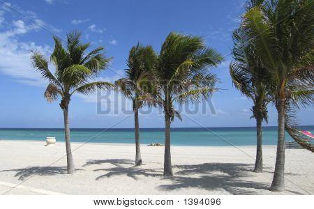 Cena de praia Florida