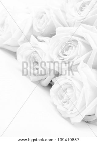 Beautiful white roses toned in sepia as wedding background. Soft focus.