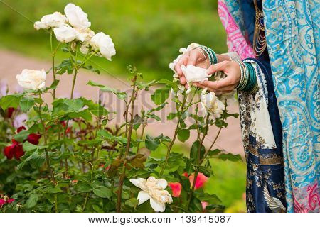 Woman hands in lacy clothes touching petals of white roses in bud in park
