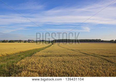 English Wheat Fields