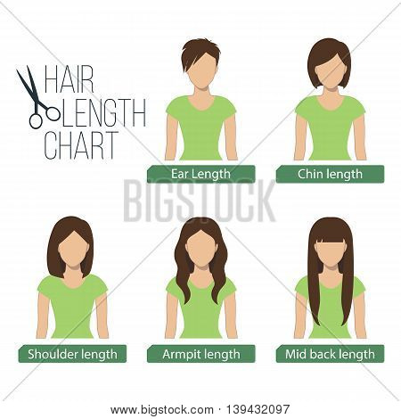 Hair length chart front view5 different hair lengths. Vector.