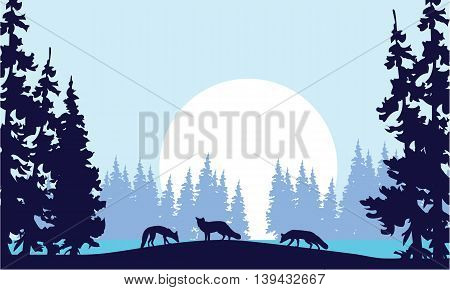 Silhouette of three fox and spruce in hill