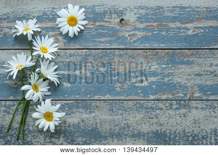 Daisy flowers on old wooden background
