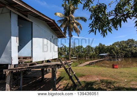 Coconut Tree with traditional wooden jetty at Tuaran, Borneo Image has grain or blurry or noise and soft focus when view at full resolution. (Shallow DOF, slight motion blur)