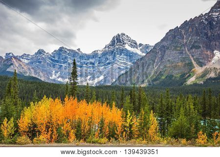 Autumn in Banff. Bright orange bush beside the road. The picturesque canyon in sunny day. Canadian Rockies, Banff National Park