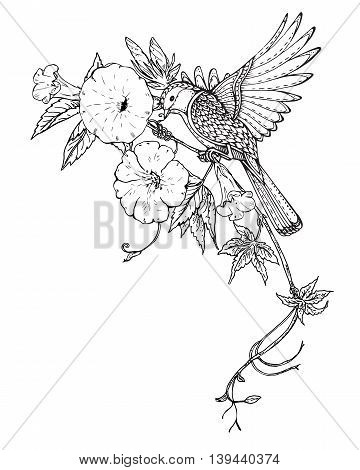 Vector illustration of hand drawn graphic bird on bindweed flower branch. Black and white image for for coloring book, tattoo, print on t-shirt, bag, invitations and greeting cards.
