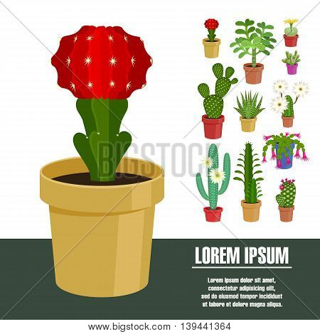 Blooming cactus. Vector illustration. Template page with the image of different kinds of cactus flower. Isolated on white background. Flat design.