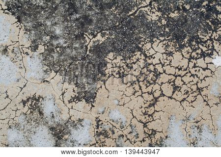 background texture nature surface cement have moss from rain water