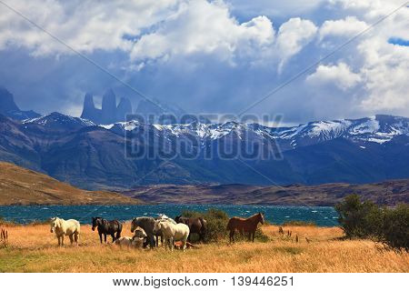 South American Andes. Park Torres del Paine in Chile. The fantastic lake in mountains. Ashore are grazed herd of horses of different colors