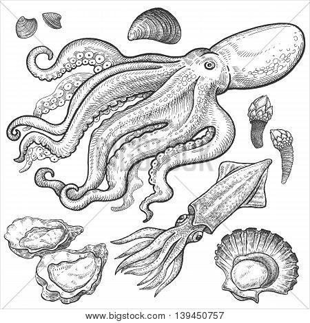 Seafood. Octopus squid oysters scallops shellfish mussels barnacles. Hand drawn seafood set. Vector illustration. Isolated image on white background. Vintage style.