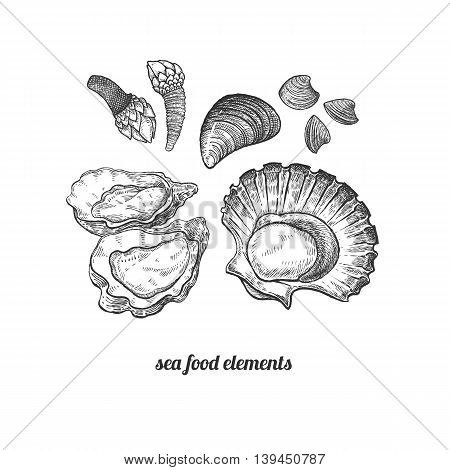Shellfish mussels scallops oysters barnacles. Seafood. Vector illustration. Isolated image on white background. Vintage style. Hand drawn seafood image.