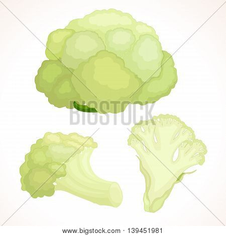 Fresh cauliflower whole cut inflorescence isolated on background. Vector illustration