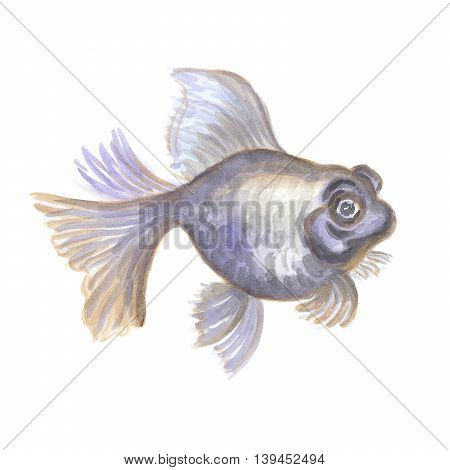 Black aquarian small fish the telescope on a white background. Watercolor painting