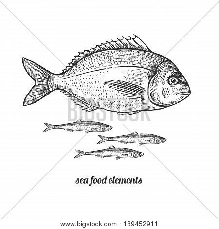 Dorado fish and anchovies. Seafood. Vector illustration. Isolated image on white background. Vintage style. Hand drawn seafood image.