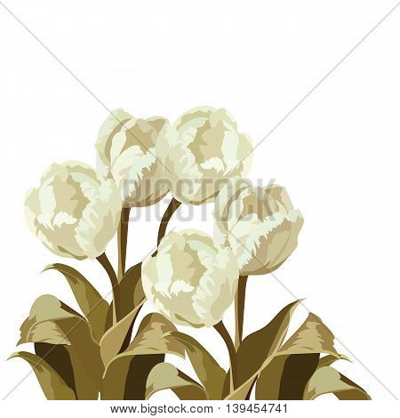Vintage Watercolor White Tulips bouquet flowers. Vector floral bouquet. Spring Summer Cream color floral Vector illustration