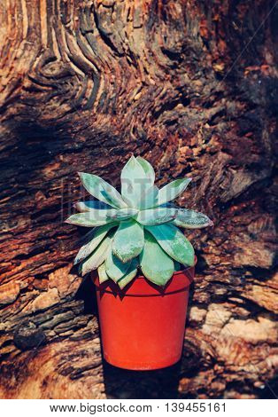 Cactus in flowerpot on the old wood
