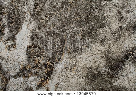 background textured surface cement have black moss from rain water