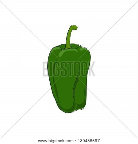 Green Bell Pepper Standing Isolated on White Background ,Vegetables Sweet Pepper, Capsicum, Vector Illustration