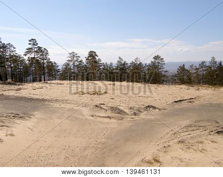 Sandy hill in the forest. Siberia