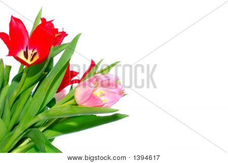 Colorful Easter Flower Background, Tulips