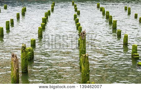 Lichen Covered Posts in an Oregon harbor