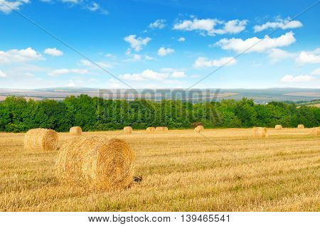 Straw bales on a wheat field and blue sky
