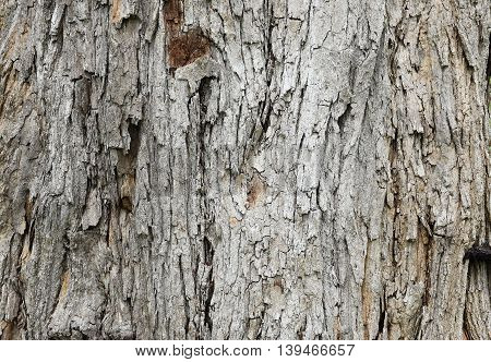 Decaying brown Wood for Textured Background, daylight