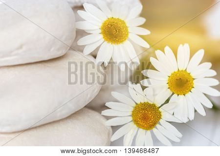 restful image of white stones and daisies