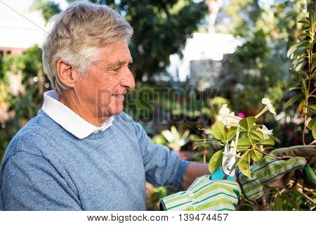 Happy mature male gardener pruning twigs of plants at garden