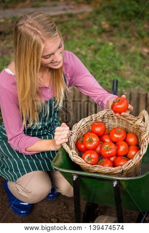 High angle view of happy young female gardener looking at fresh tomatoes in basket at garden