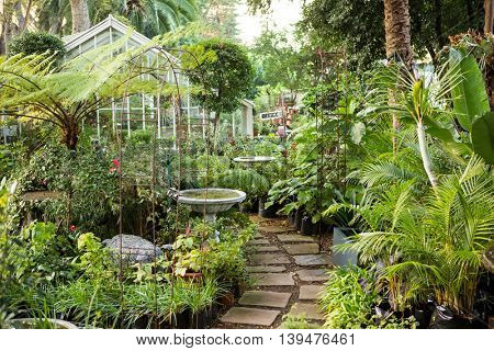 Empty footpath amidst organic plants at greenhouse