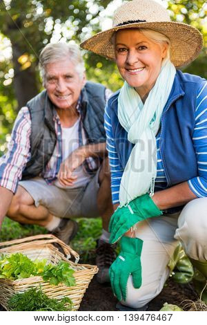 Portrait of confident mature gardeners at vegetable garden
