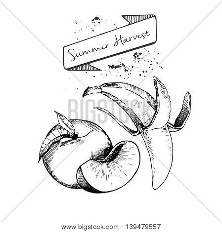 Vector set of summer harvest. Decorated with banner and blots. Fresh detox fruit collection. Peach and banana.