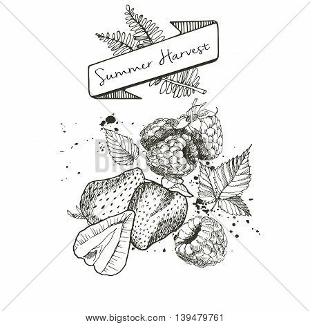 Vector set of summer harvest. Decorated with banner fern leaves and blots. Fresh detox fruit collection. Strawberry and rasbberry.