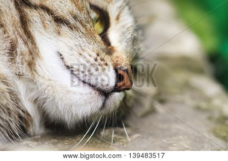 funny cute cat face with big nose